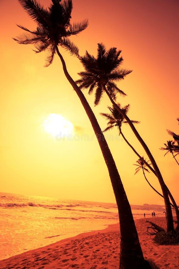 Tropischer Strand unter KokosnussPalmen stockbilder