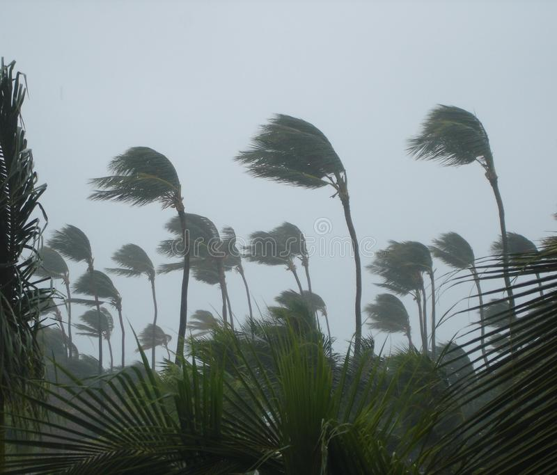 Tropischer Sturm lizenzfreies stockfoto