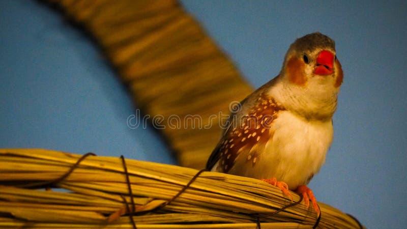 Tropischer Vogel lizenzfreie stockfotos