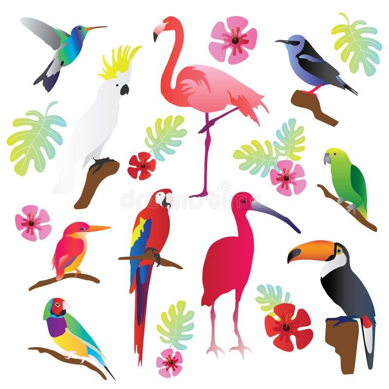 Tropischer Vogelvektorillustrations-Sammlungssatz Bunte und exotische Natur Papagei, Tukan, Flamingo und andere Fliegengeschöpfe lizenzfreie abbildung