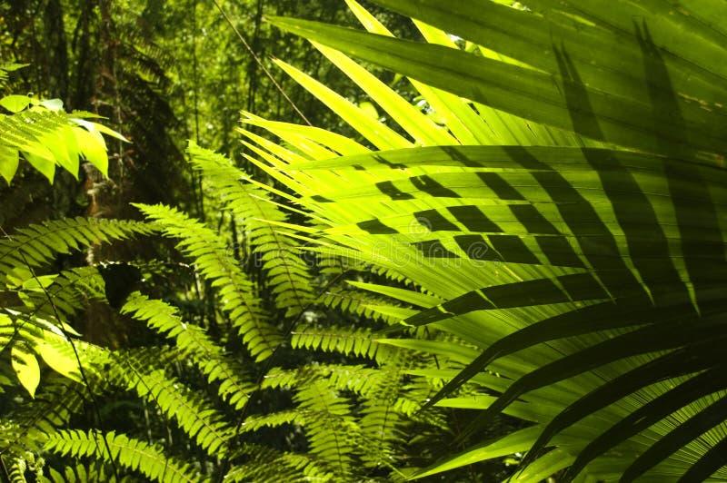 Tropischer Wald. stockfotos