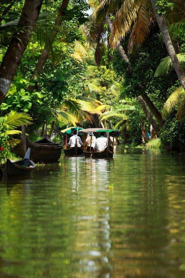 Tropischer Wald der Palme im Stauwasser von Kochin, Kerala, Indien stockbilder