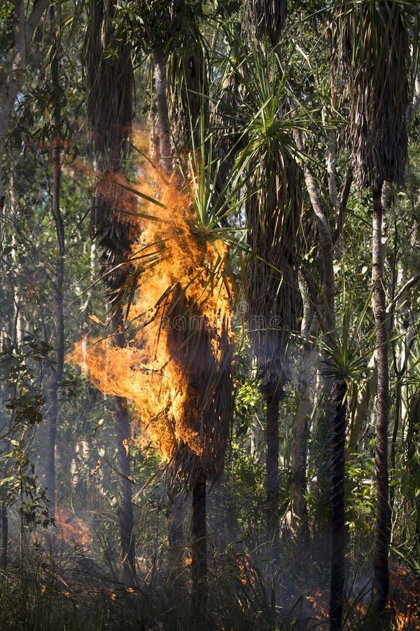 Tropischer Wald im Feuer lizenzfreie stockfotos