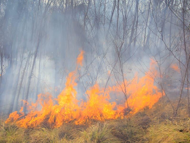 Tropischer Waldbrand stockfoto