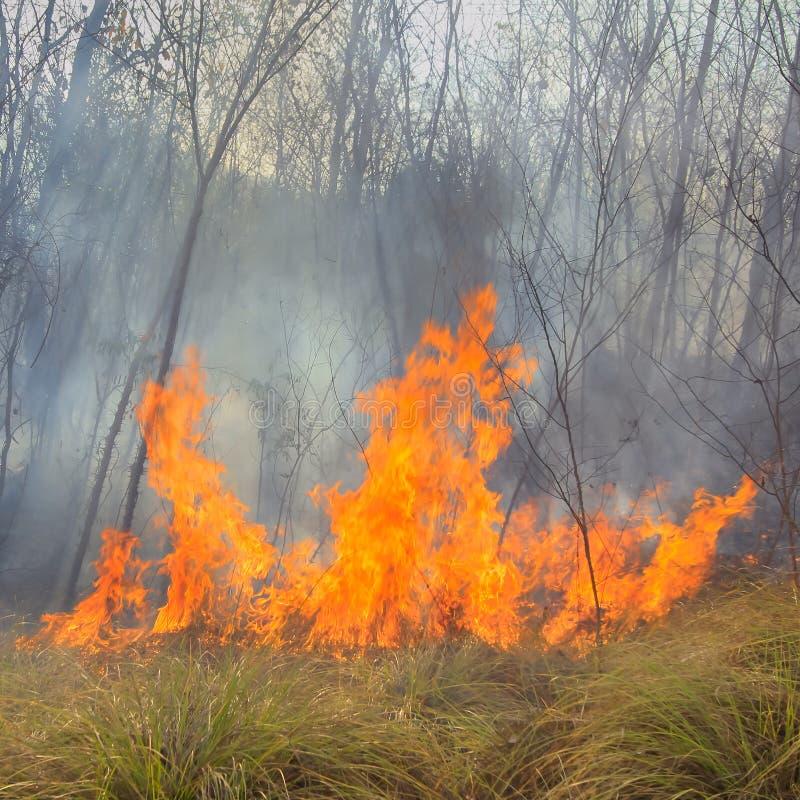 Tropischer Waldbrand stockfotografie