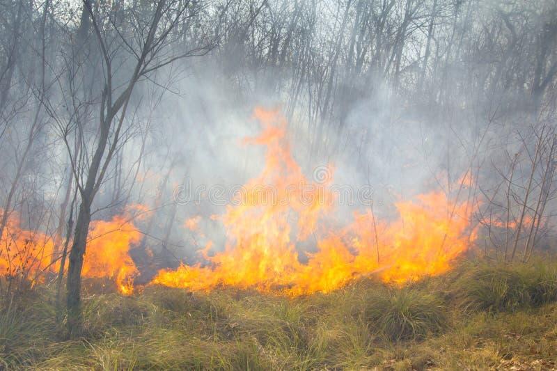Tropischer Waldbrand lizenzfreies stockbild