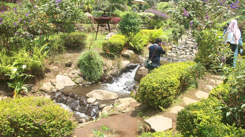 Tropischer Wasserpark stockbilder