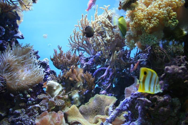 Tropisches Aquarium lizenzfreie stockbilder
