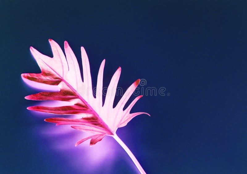 Tropisches Blatt mit negativer Auswirkung stockfoto