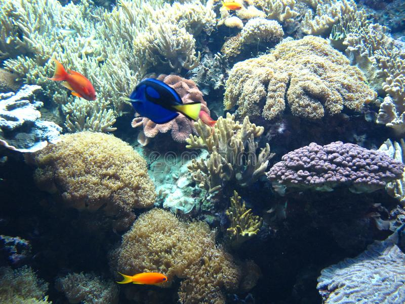 Tropisches Fischaquarium stockfoto