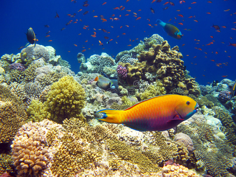 Tropisches Korallenriff stockbilder