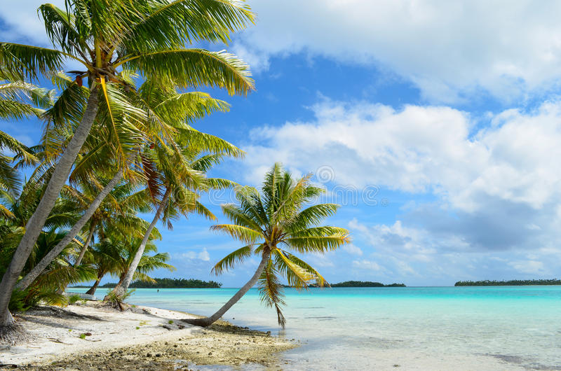 Tropisches Palm Beach lizenzfreie stockfotos