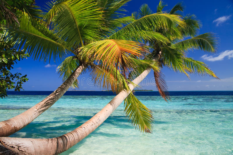 Tropisches Paradies bei Maldives stockbild