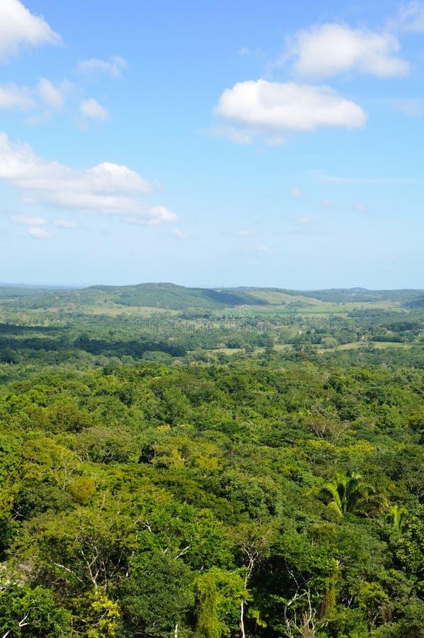 Tropisches Regenwald-Kabinendach lizenzfreie stockfotos