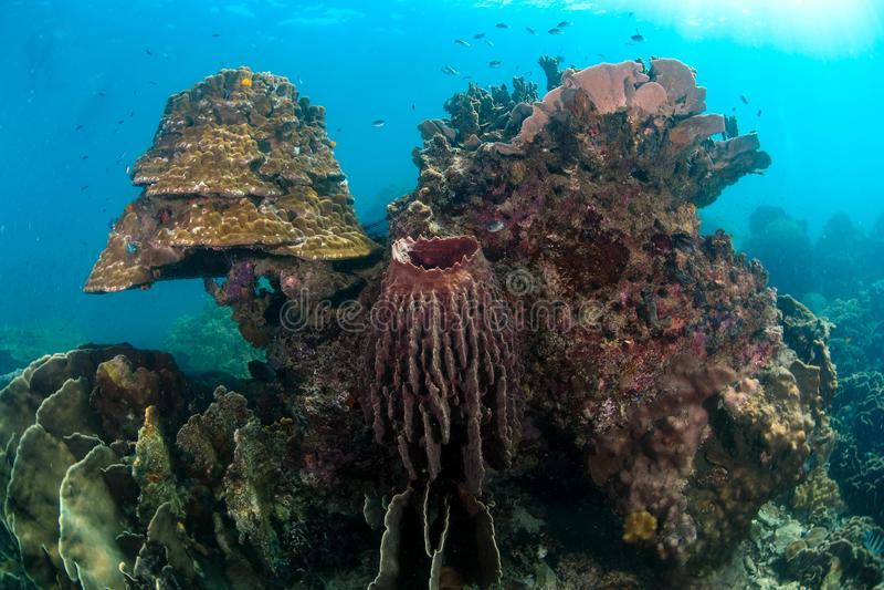 Tropisches Riff eine wunderbare und schöne Unterwasserwelt mit Co stockfotografie