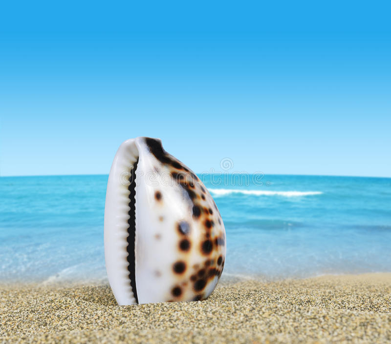 Tropisches Seeshell lizenzfreies stockbild