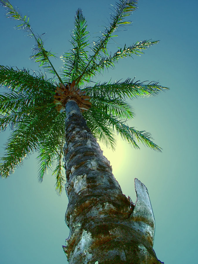 Download Tropisches Träumen stockbild. Bild von blatt, palme, insel - 35545