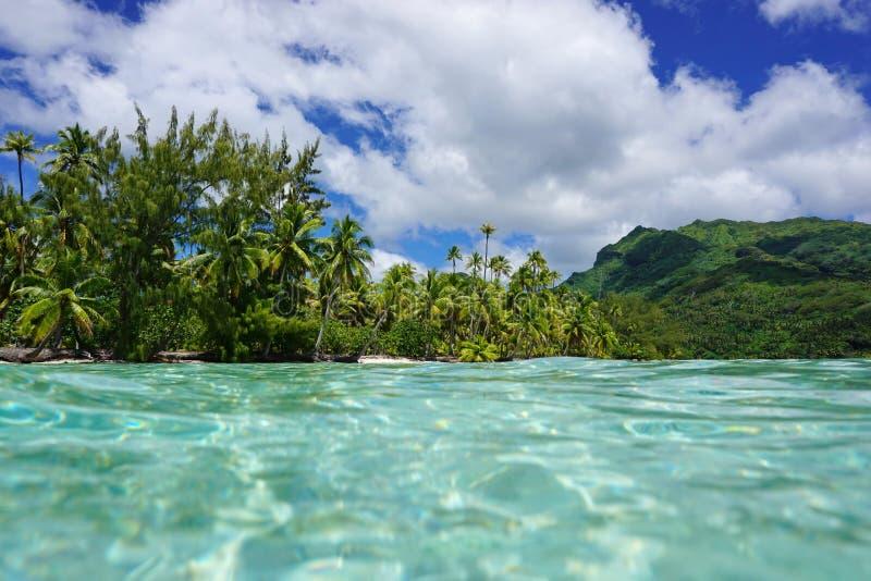 Tropisches Ufergrün-Vegetation Französisch-Polynesien stockfotografie