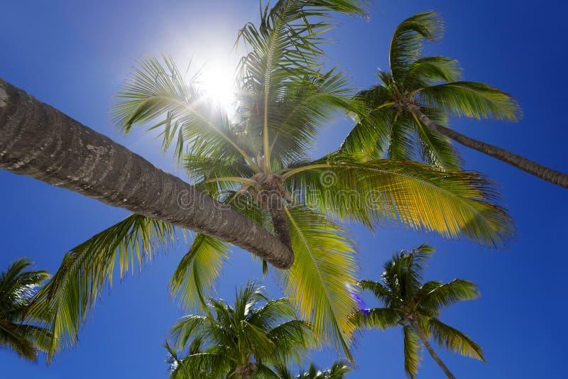 tropisk ö arkivfoto