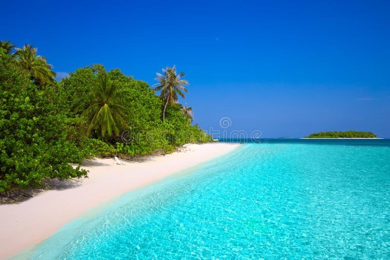 Tropisk ö med den sandiga stranden med palmträd och turkos c fotografering för bildbyråer