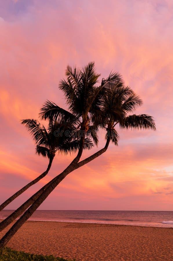 tropisk ösolnedgång royaltyfri foto