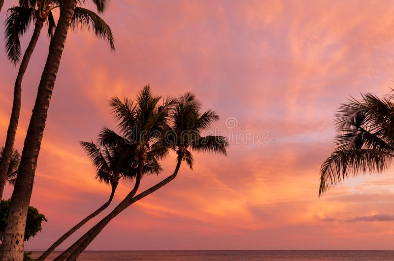 Tropisk ösolnedgång på Maui royaltyfria bilder