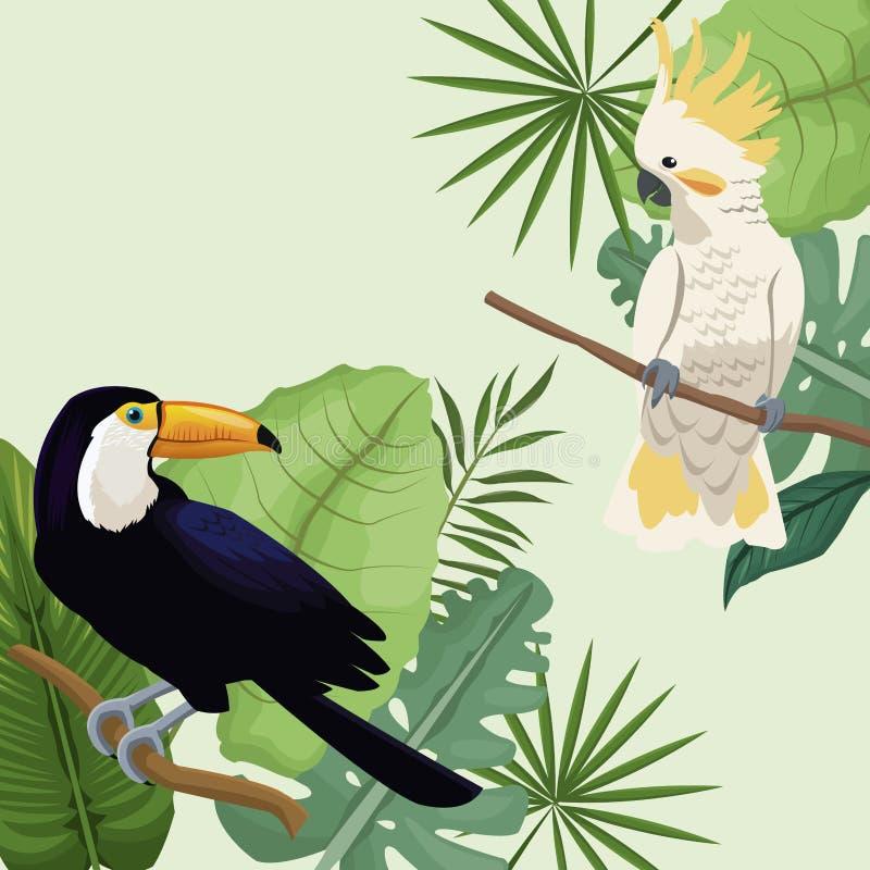 Tropisk affisch för kakadua- och tukansidor vektor illustrationer
