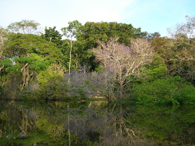 tropisk amazon skogflod arkivfoton