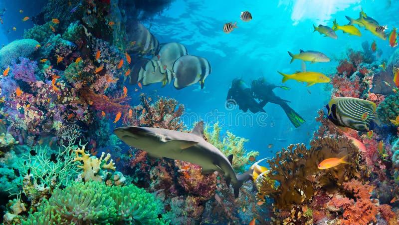 Tropisk Anthias fisk med netto brandkoraller arkivfoton