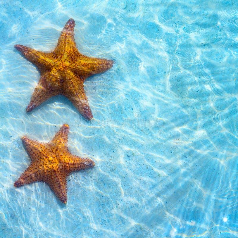 Tropisk bakgrund för abstrakt blått hav med sjöstjärnan på sand royaltyfria bilder