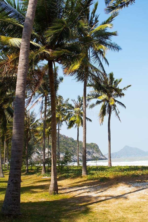Tropisk bakgrund med kokosnöten gömma i handflatan royaltyfri fotografi