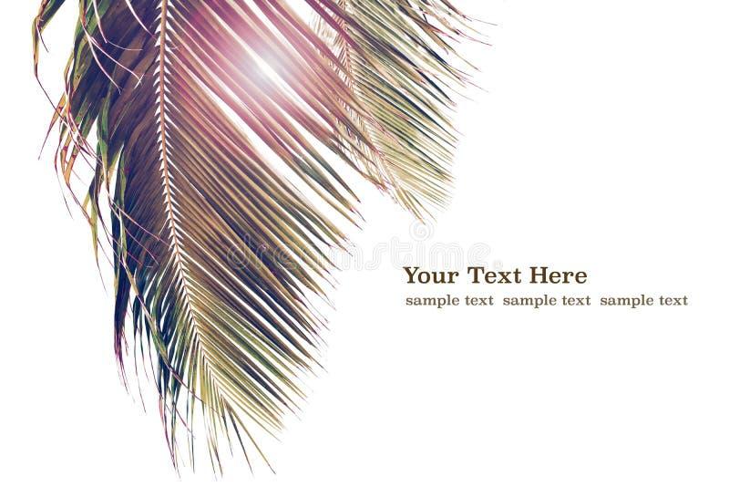 Tropisk bakgrund med palmträd i solljus För ferieloppdesign Mallpalmträd som isoleras på vit för rengöringsdukbaner w arkivfoton
