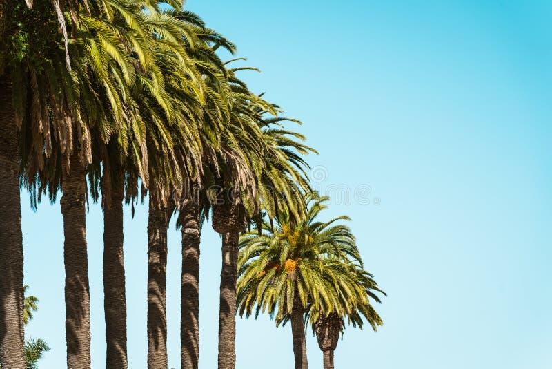 tropisk bakgrundssommar H?rliga palmtr?d och klar bl? himmel royaltyfri fotografi