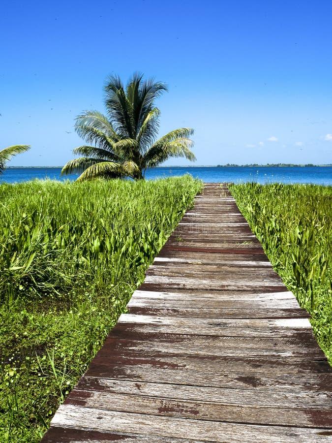 Tropisk bana till sjön arkivbild