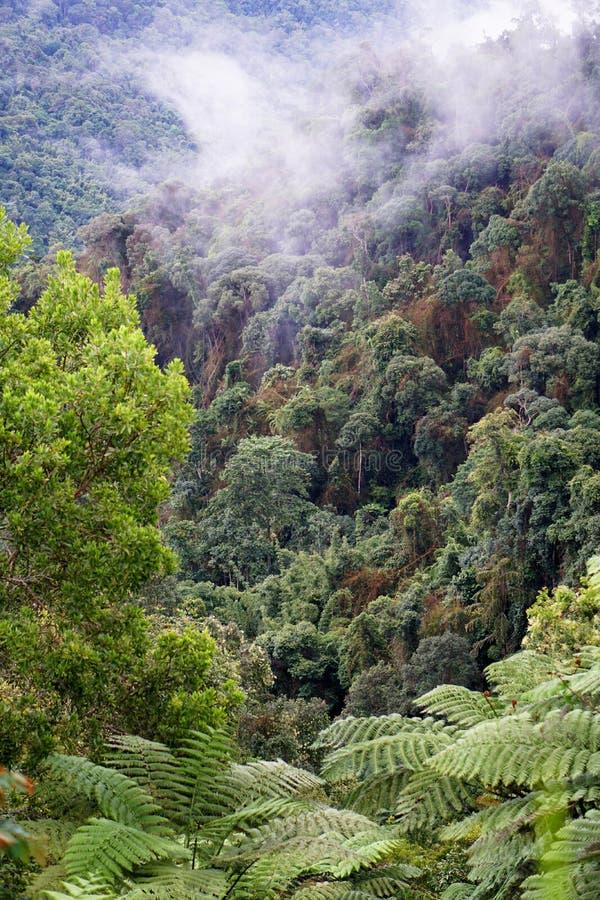 Tropisk bergskedjasikt Sikt av flyttande moln och dimma ?ver Titiwangsa bergskedja Sikt av djungeln f?r h?g fuktighet royaltyfri foto