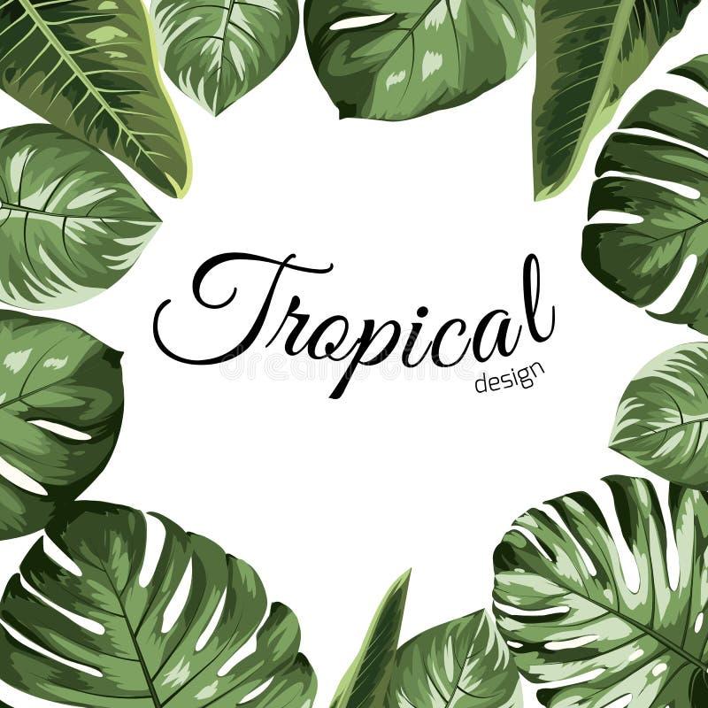 Tropisk beståndsdel för ram för vektordesigngräns Den gröna palmträdet för monsteraphilodendrondjungeln lämnar sortimentet stock illustrationer