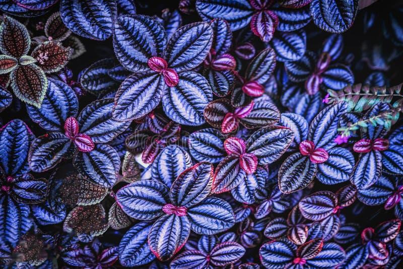 Tropisk bladnärbild som tonas i trendig moderiktig violett färg Abstrakt naturlig textur av den blom- djungelmodellen arkivfoton