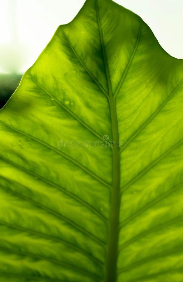 Tropisk bladstruktur arkivfoton