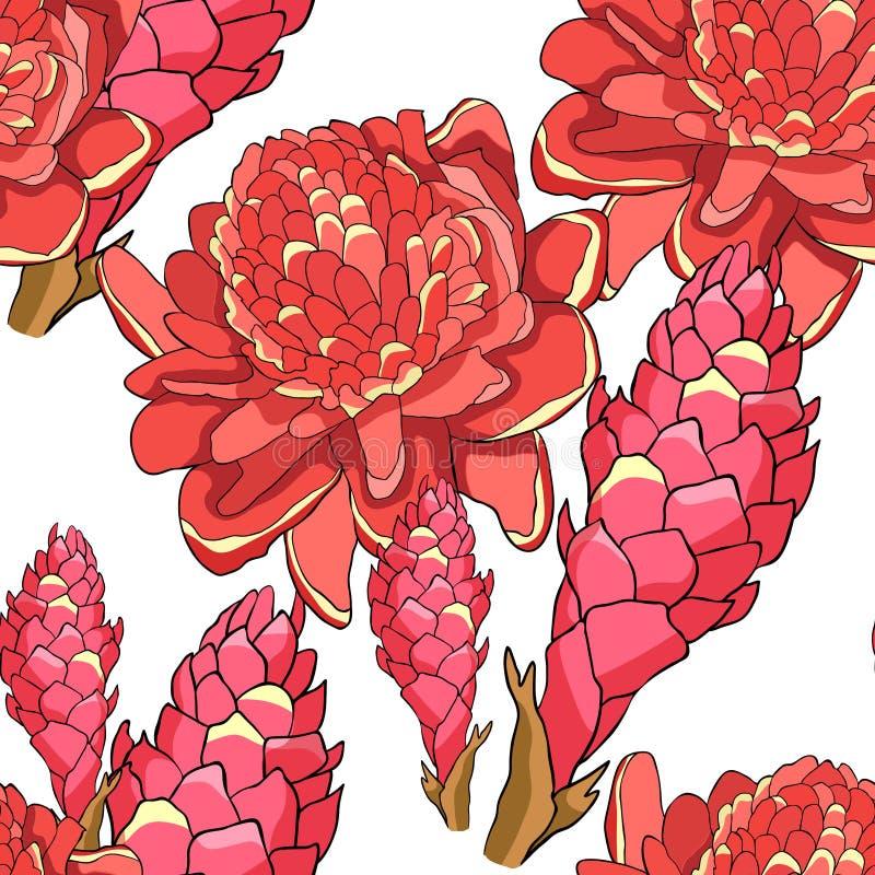 Tropisk blomma för sömlös modell av den ljust rödbrun röda facklan Vektor dåligt royaltyfri illustrationer