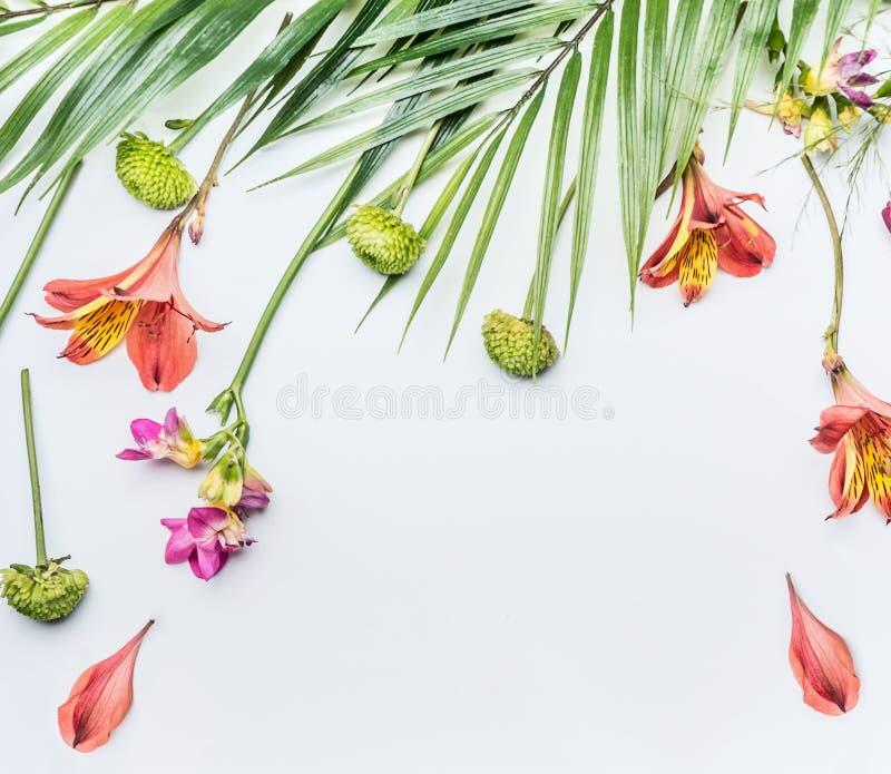 Tropisk blomma- och palmbladsammansättning för sommar på vit bakgrund, bästa sikt fotografering för bildbyråer