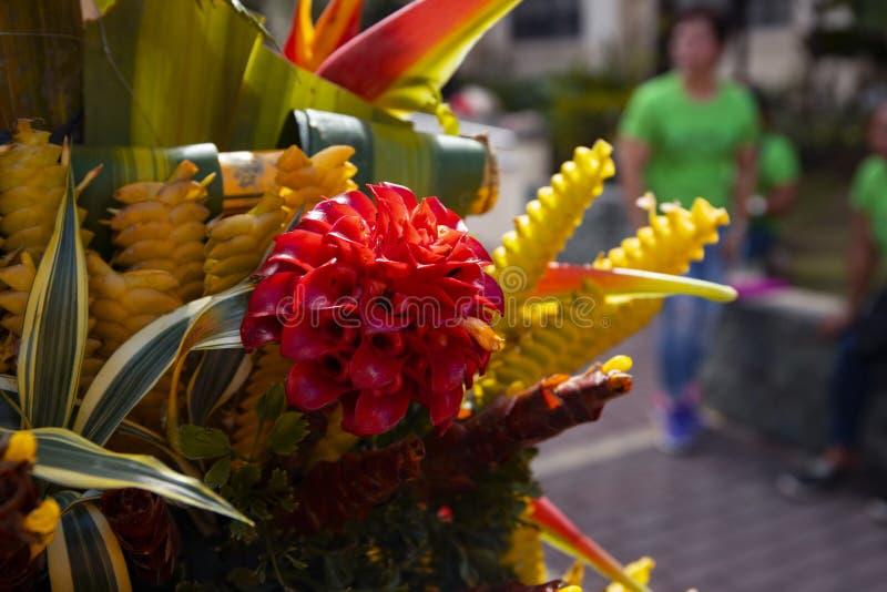 Tropisk blommadekorcloseup Exotiskt blom- texturfoto Romantisk banermall med den tropiska blomman fotografering för bildbyråer