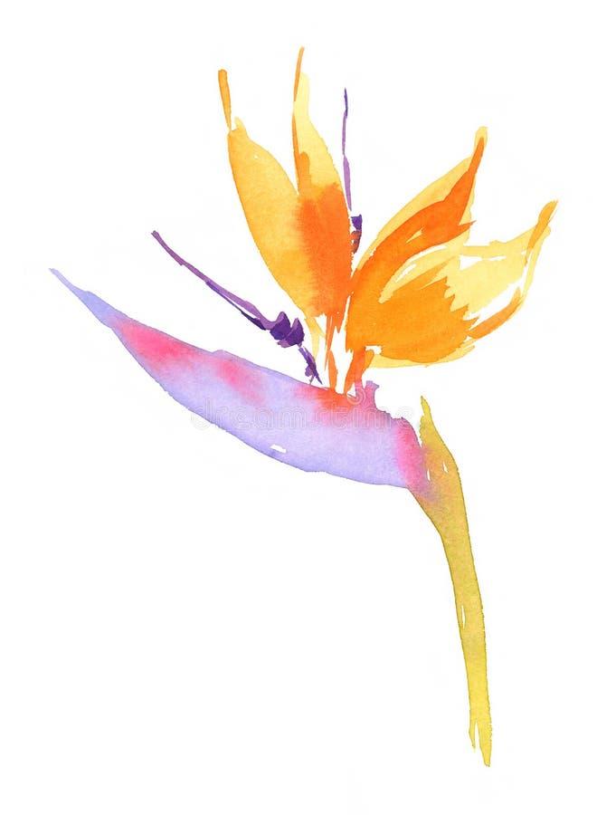 Tropisk blommafågel av den målade paradisillustrationhanden vektor illustrationer