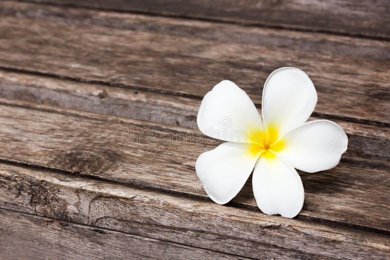 Download Tropisk Blommafrangipani På Trä Arkivfoto - Bild av härlig, växt: 76701026