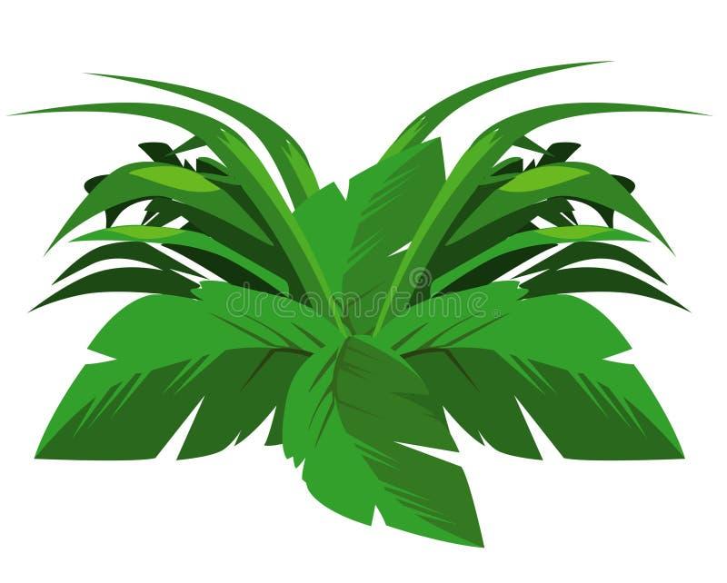 tropisk buske royaltyfri bild
