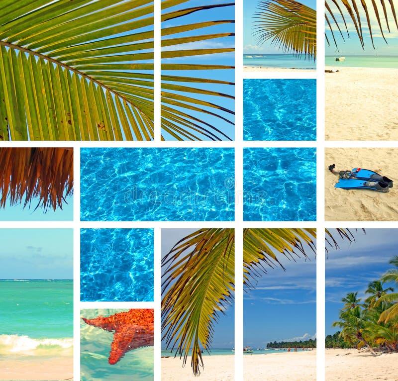 tropisk collage royaltyfria foton