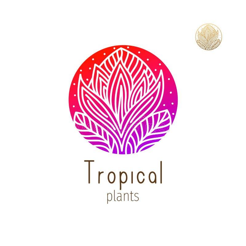 Tropisk djungel vektor illustrationer