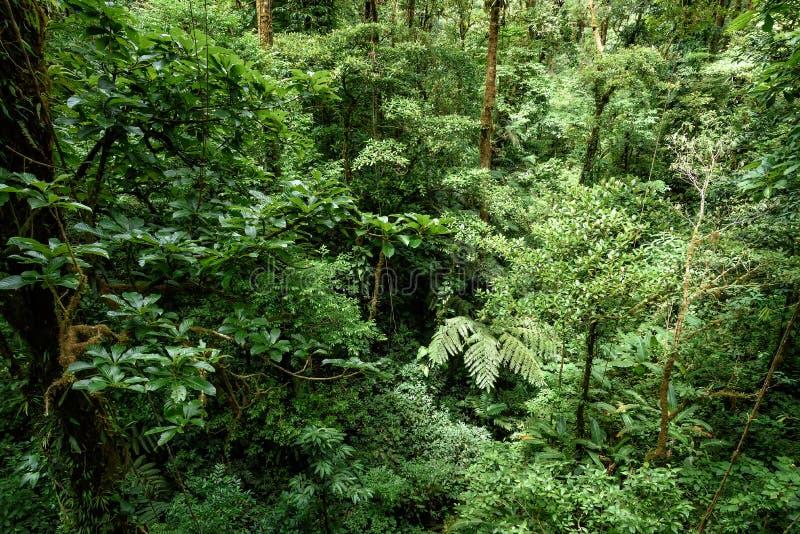 Tropisk djungel i Central America arkivbilder