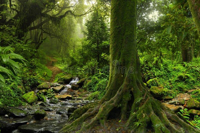 Tropisk djungel med floden arkivbild