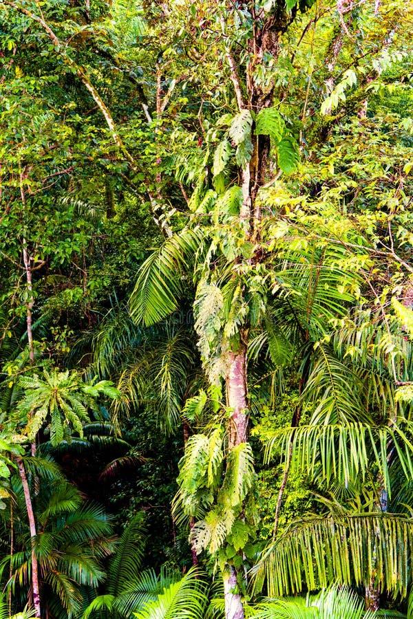 Tropisk djungelskog i Central America arkivbilder
