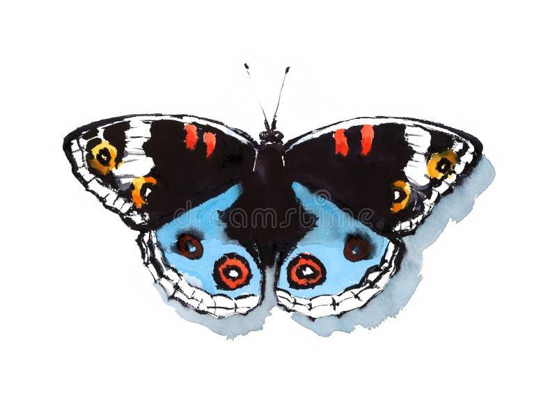 Tropisk dragen illustration för Buckeyefjärilsvattenfärg hand vektor illustrationer